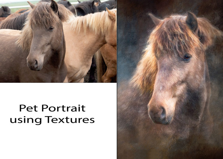 Before & After Pet Portraits
